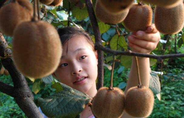 为什么没熟的水果会自己变熟?
