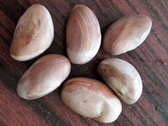 菠萝蜜的核能吃吗?菠萝蜜核的吃法和禁忌