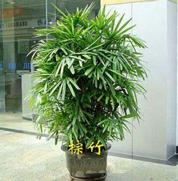 家中放什么植物比较好?18款绿植吸醛又净味